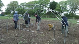 polytunnel-gang-1